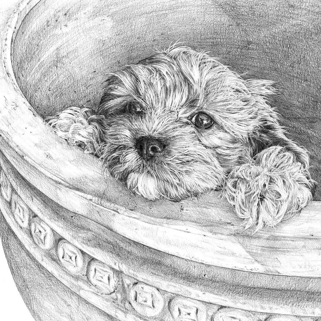 Cavoodle Dog Cavoodle Customart Graphitedrawing Animal Drawings Art Inspiration Graphite Drawings