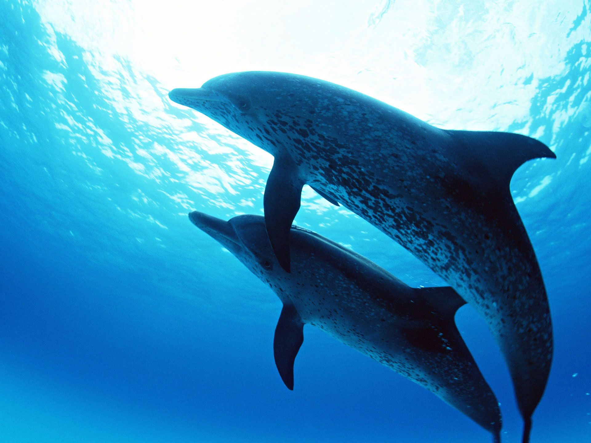 under the sea images | dolphins_under_the_sea-normal.jpg | Day Of ...