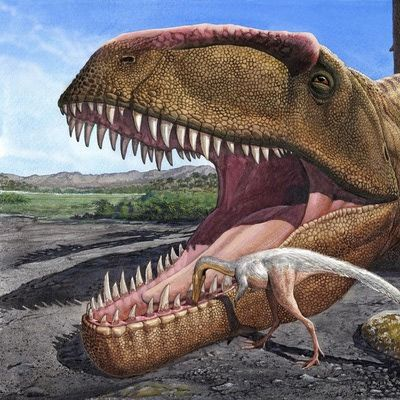Not all dinosaurs fought tooth-and-claw (Sergey Krasovskiy) Some smaller dinosaurs learned to scavenge bits of meat from larger dinosaurs' teeth. An act of dental hygiene usually tolerated by the larger meat eater, I suppose, because the smaller meat eaters (even a mouth full of 'em) would not enough to satisfy a big meat eater's appetite.