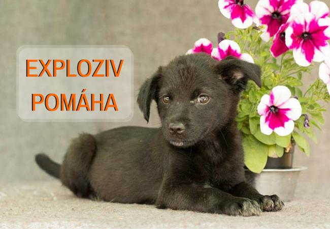 Zdroj:acebook.com/kszvolen/      Niektoré zvieratká nemali to šťastie, aby mali svoj domov. Môžete to však spoločne s nami zmeniť.        Každé zvieratko si zaslúži lásku človeka. Osud je však nevyspytateľný a mnohé zvieratá sú opustené...