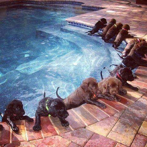 Puppy pool party  (Found via Facebook)