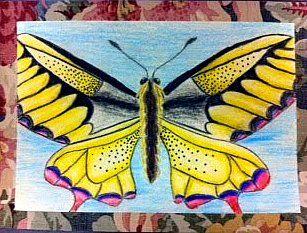 Beautiful Butterfly drawings