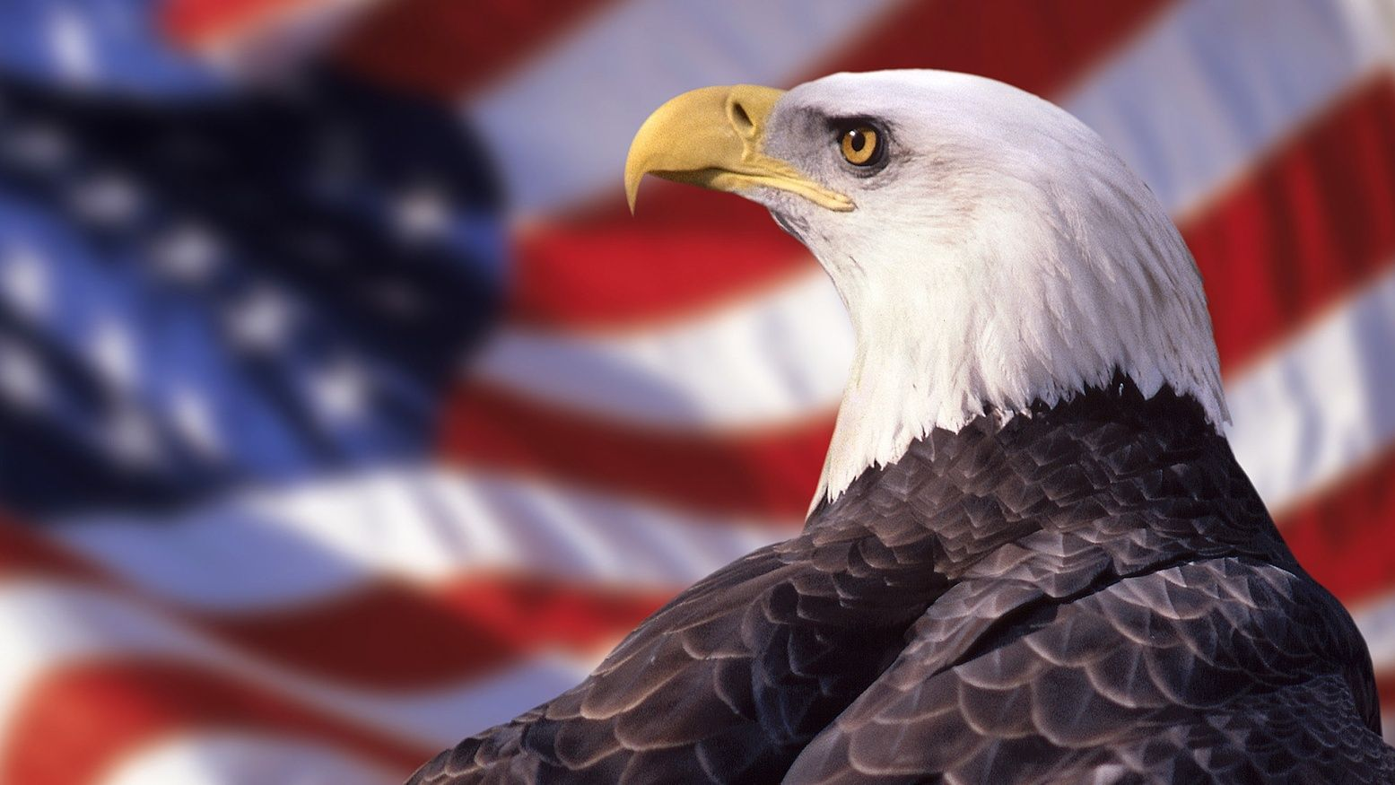 American Flag Eagle Wallpaper American Bald Eagle Eagle Wallpaper