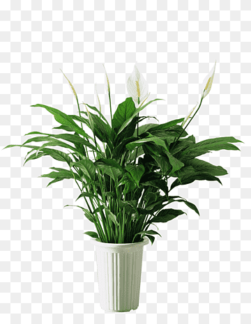 Potted Plant Pot Png Transparent Clipart Image And Psd File For Free Download Flower Png Images Flower Pots Free Watercolor Flowers