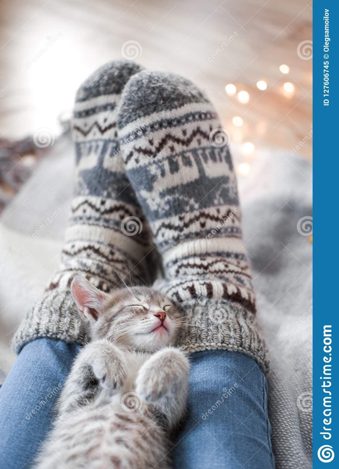 Cute Gray Kitten Resting Christmas Lights On The Background Grey Kitten Kittens Cutest Grey Tabby Kittens