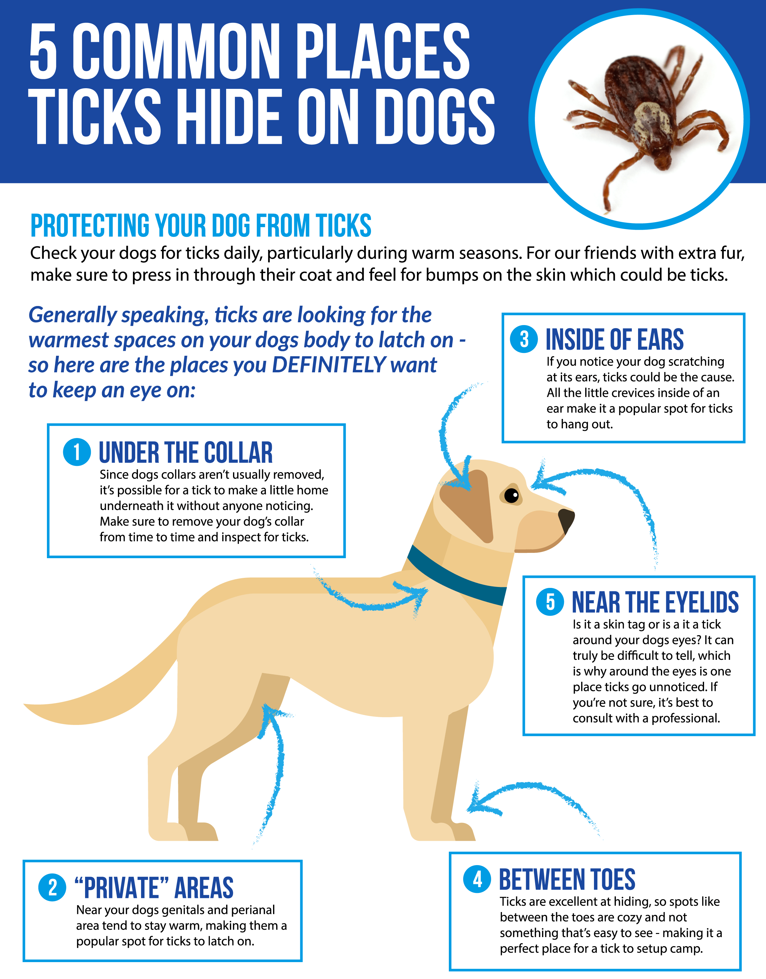 Show Picture Of Ticks On Dog