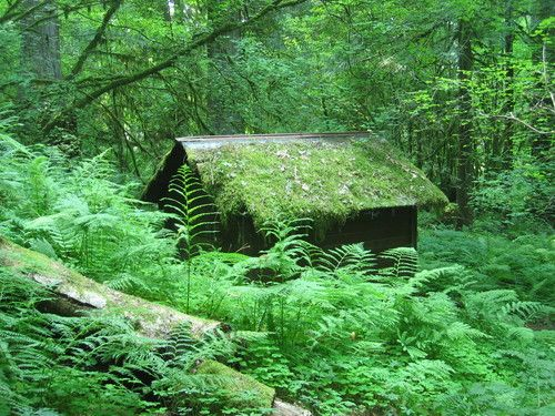 Secluded Cabin in Oregon--Pretending I'm there right now.
