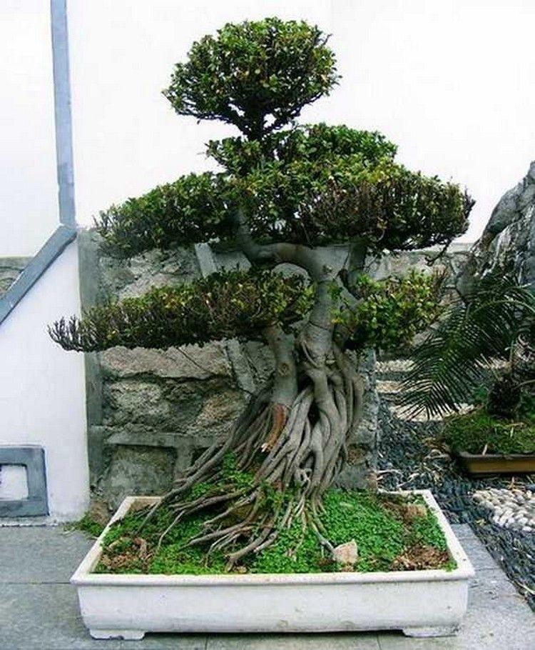 70 Amazing Bonsai Tree Care Bonsai tree, Bonsai garden