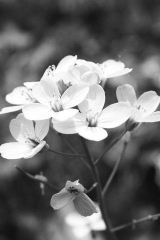 White flowers iphone wallpaper stuff pinterest wallpaper white flowers iphone wallpaper mightylinksfo