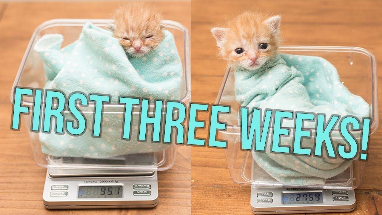 Update Baby Hank S First Weeks Baby Kittens Newborn Kittens Kitten Care