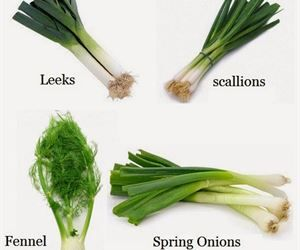 How To Re Grow Leeks Scallions Spring Onions And Fennel From Kitchen Scraps Leeks Growing Leeks Growing Fennel