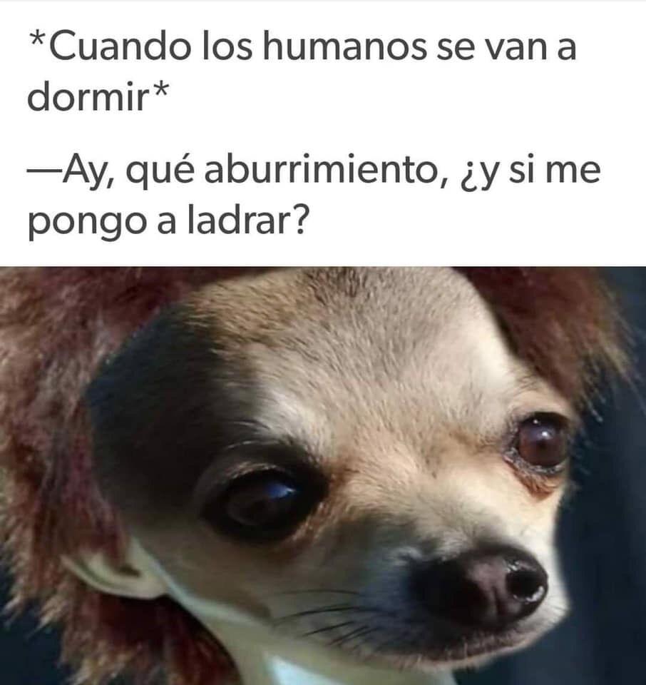Pin By Torrita Mateo On Humor 2 Funny Memes Memes Hilarious