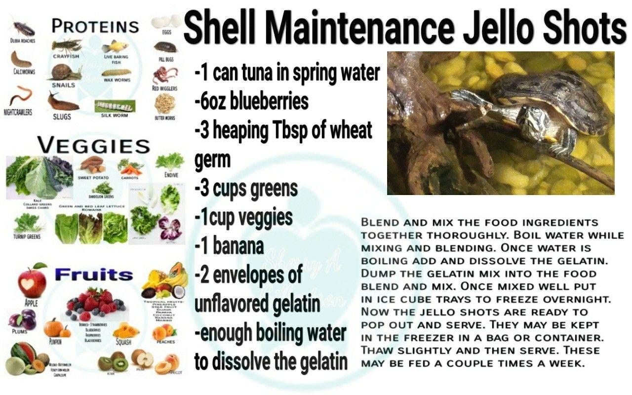 Shell maintenance jello shots Pet turtle, Pet turtle