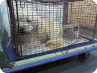 Miami Fl Poodle Miniature Meet Oscar A Dog For Adoption Dog Adoption Kitten Adoption Adoption