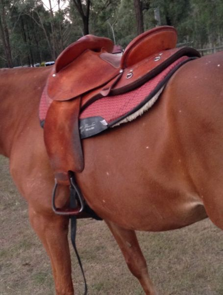 Swinging Fender Saddle For Sale About 6 Years Old But Has