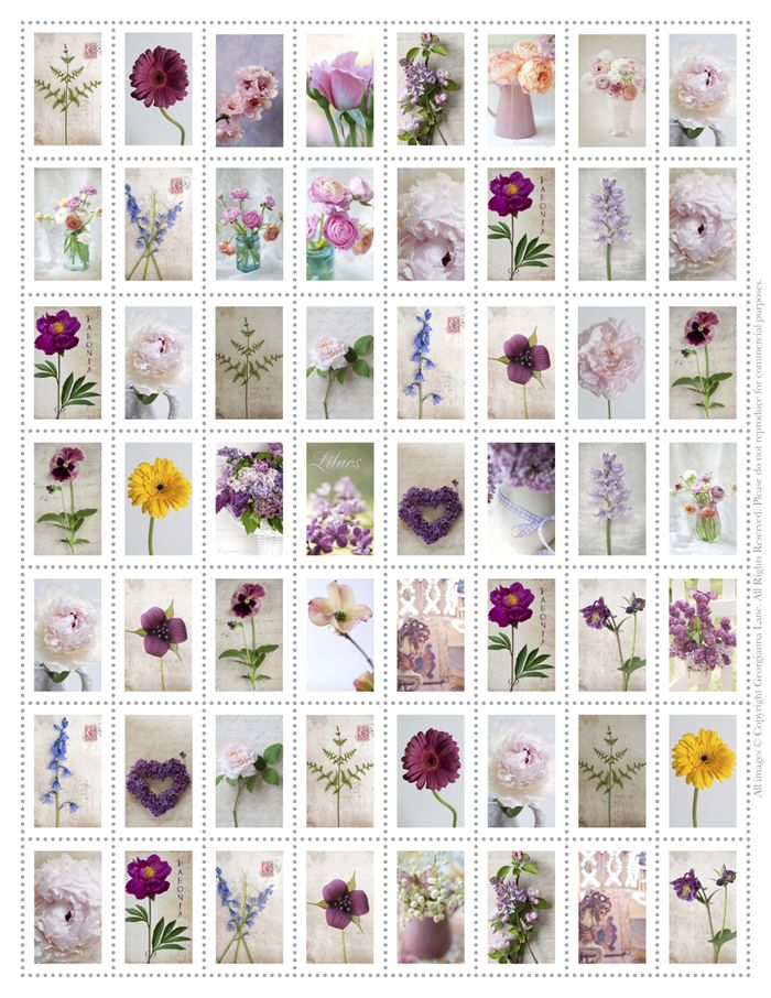 photograph relating to Stamps Printable identified as No cost printable flower stamps - simply lovely!! @ Georgianna