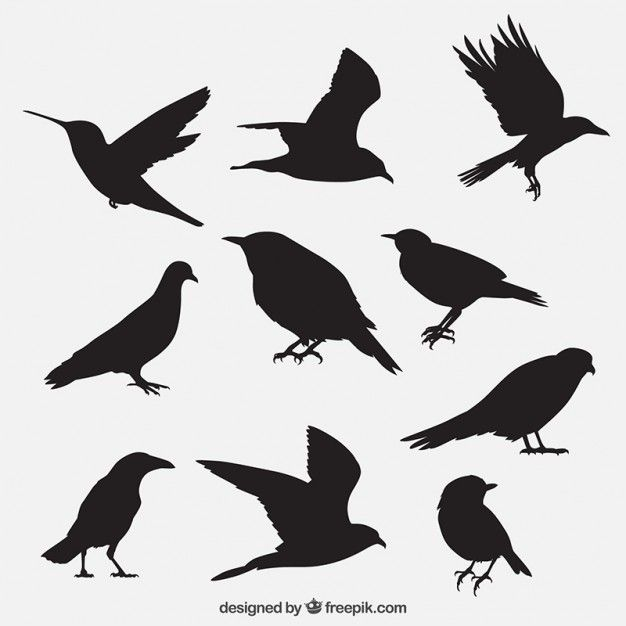 Vogel umreißt Sammlung Kostenlose Vektoren   art class ideas ...