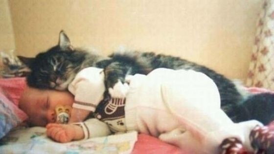 interspecies spooning - how completely adorable!!!