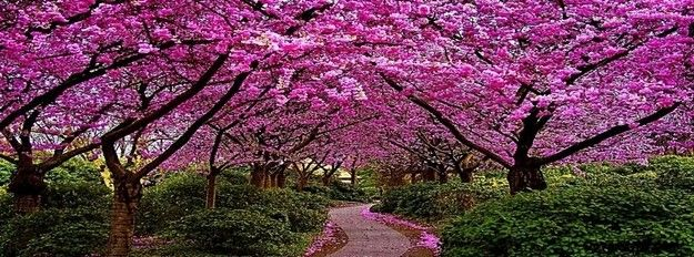 Pink Spring Facebook Cover Fb Covers Pinterest Cerezo