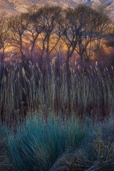 Owens Valley, California _ Morning Fields_Marc Adamus