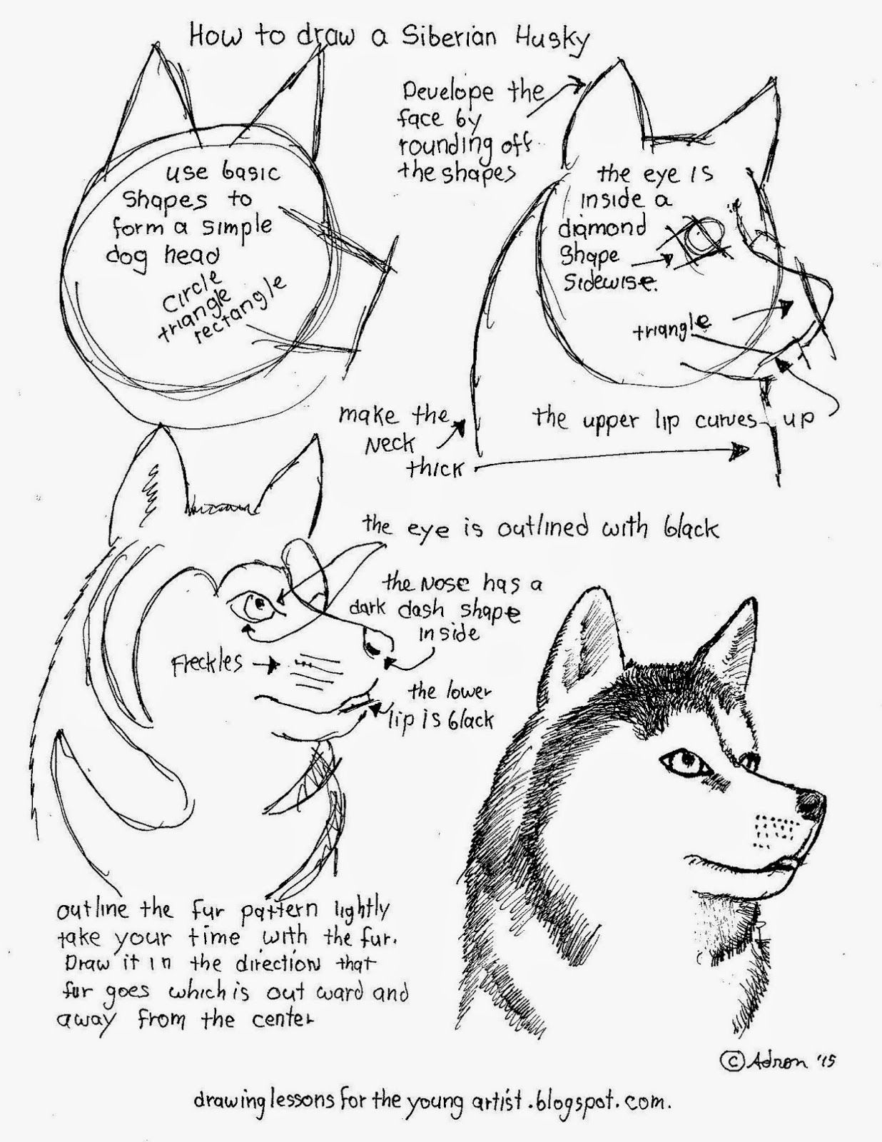 How To Draw A Siberian Husky Free Printable Worksheet How To Draw Worksheets For Young Artist
