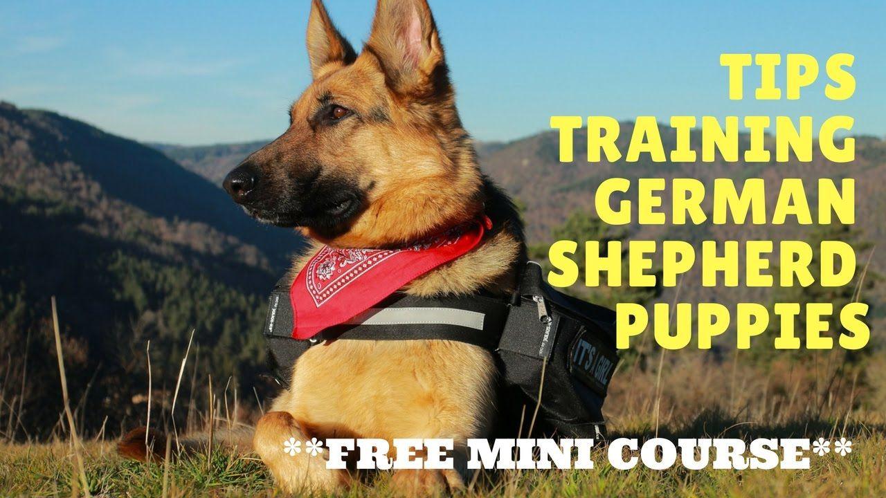 Tips Training German Shepherd Puppies Free Mini Course German
