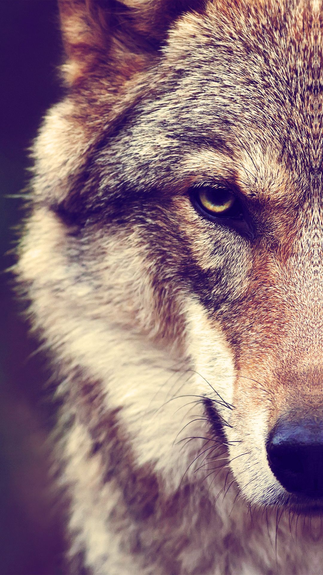 Wolf Wallpapers Background » Hupages » Download Iphone