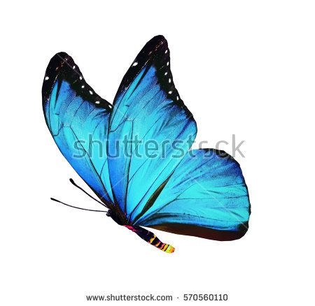 Free Image on Pixabay - Butterfly, Blue, Insect | Drawing ...