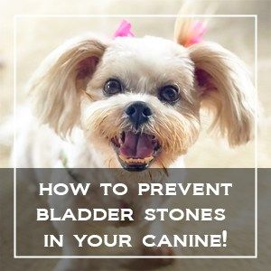How To Prevent Bladder And Kidney Stones In Your Canine Healthy