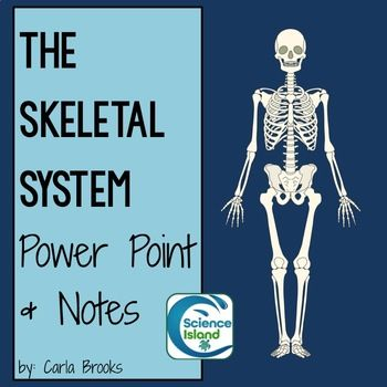 skeletal system powerpoint lesson and notes - anatomy & physiology, Skeleton