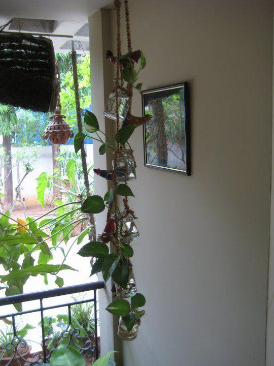DIY holder for basic hydrophytes(using empty glass jars)