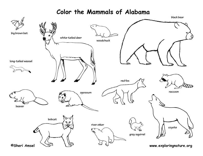 Countries And Cultures Coloring Pages For Preschool Kindergarten