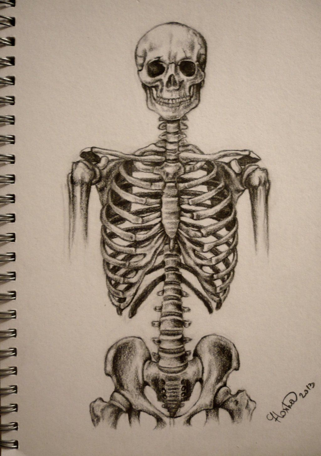 Skeleton Torso By Stupidestusernameeve On Deviantart Skeleton