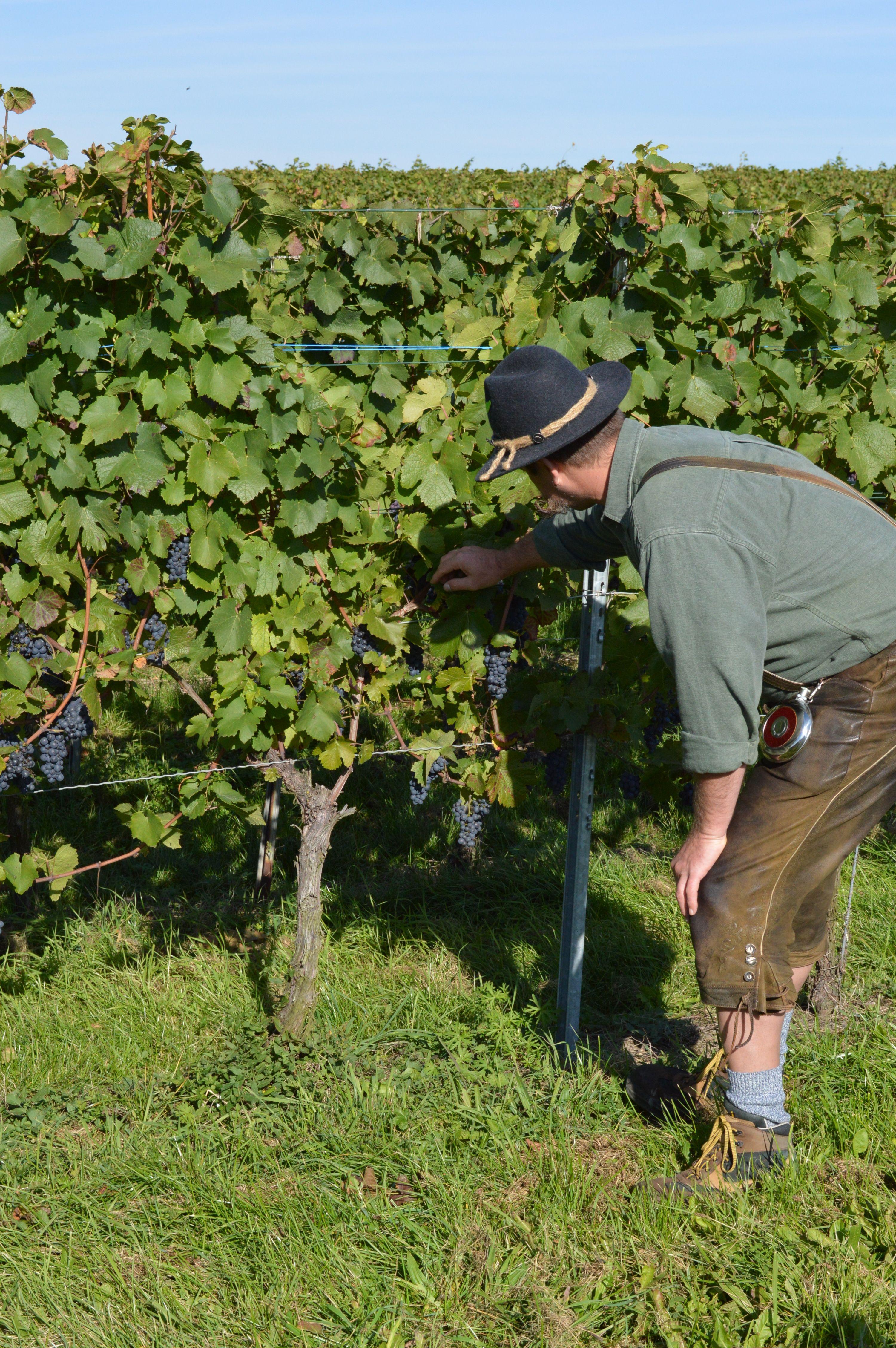 Wein ein Endlos schönes Thema bei uns in der Schwäbischen Toskana mit den Winzern vom Weinsberger Tal bei uns im Flair Hotel Landgasthof Roger in Löwenstein