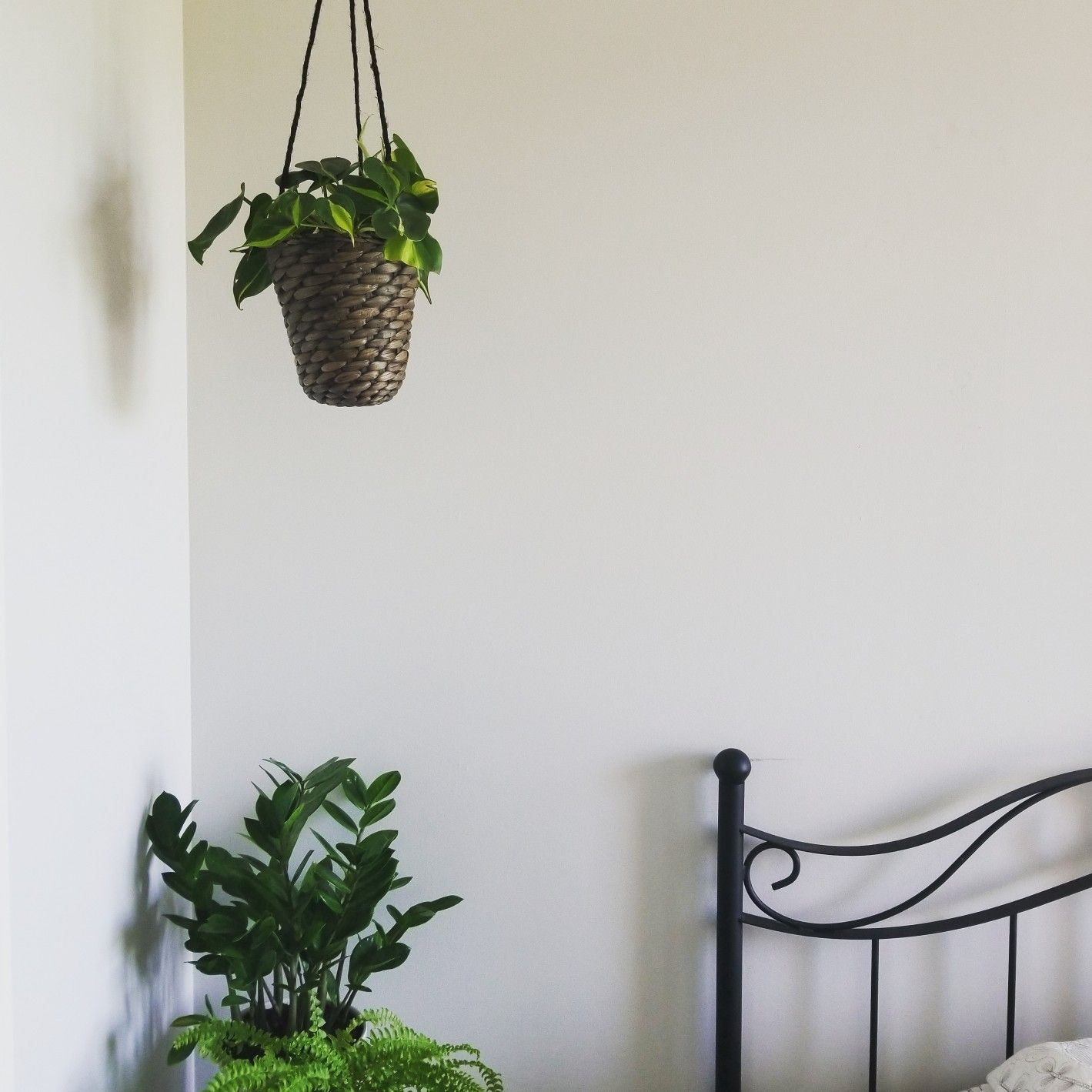 Scandinavian Style Bedroom With Philodendron Brasil And Zzplant