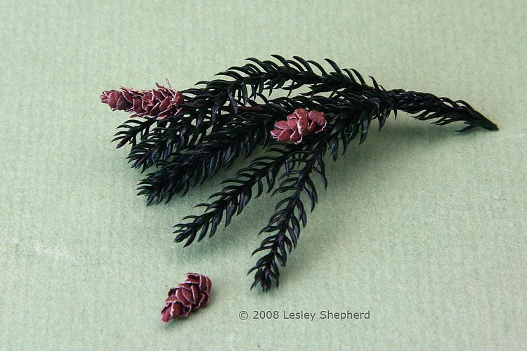 Miniatures Projects Tutorials With Images Miniature Trees Miniature Plants Christmas Plants