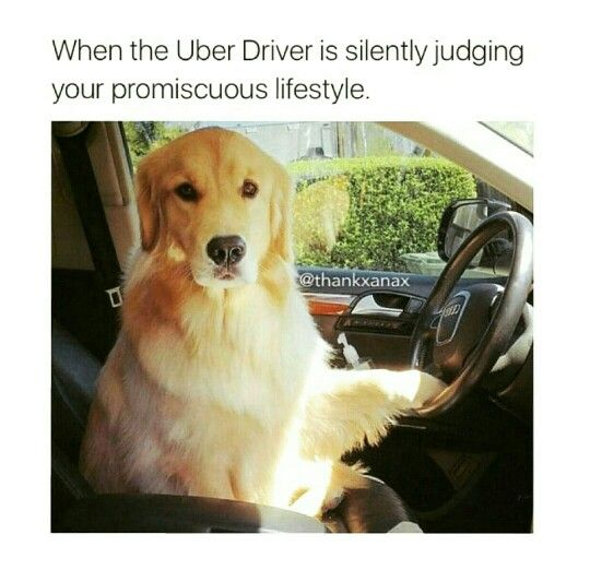 The Uber Driver Is Judging You Cute Dog Memes Animal Memes