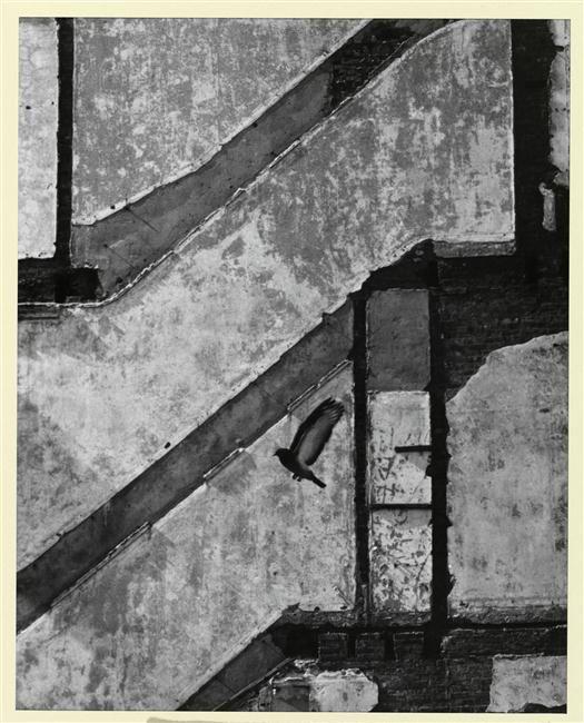 """""""Pigeon se posant"""". Paris, Bibliothèque nationale de France (BnF) - Photo (C) BnF, Dist. RMN-Grand Palais / image BnF"""
