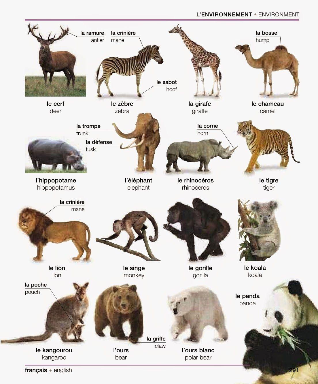 18+ All Animals Name Hindi And English