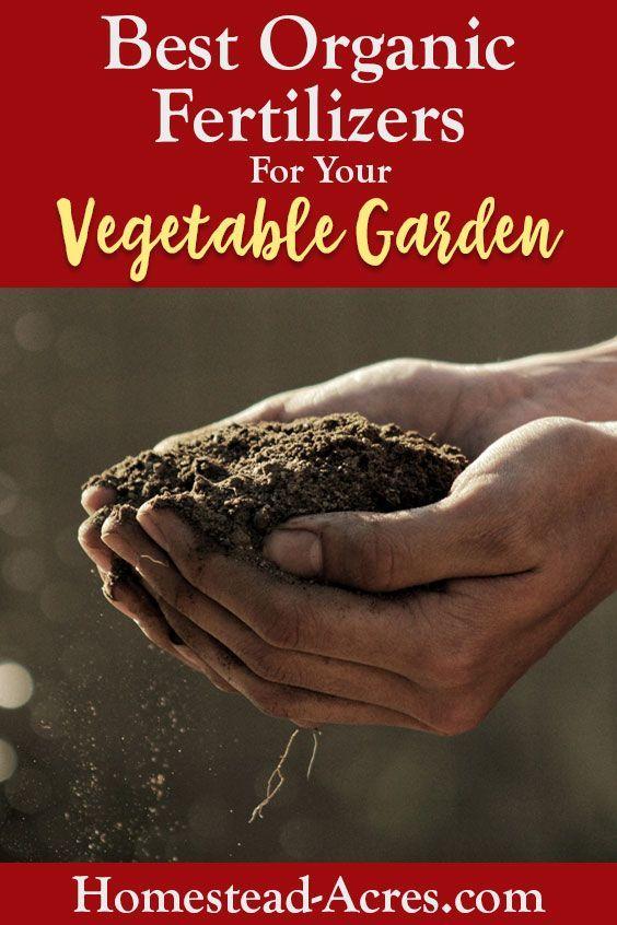 10 Best Organic Fertilizers For Your Vegetable Garden 400 x 300