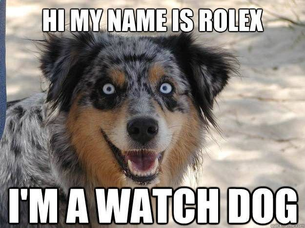 Hi My Name Is Rolex I M A Watch Dog Dog Names Funny Dog Pictures Funny Dog Names