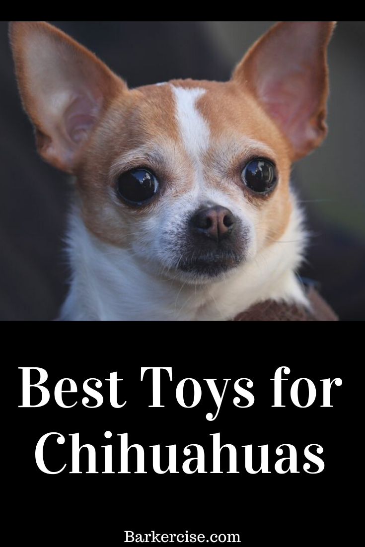 Best Toys For Chihuahuas Best Apartment Dogs Apartment Dogs Dogs