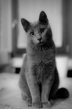 Grey Kitten With White Paws Google Search Cat Personalities
