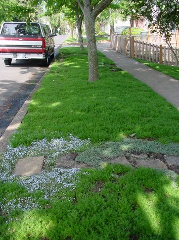 Low Maintenance Front Garden Ideas Curb Appeal