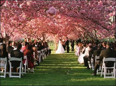Cherry blossom wedding Brooklyn Botanic Garden private