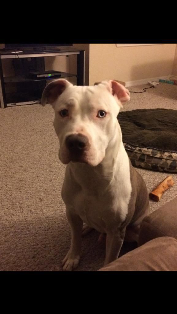 Lost Dog Male Lawrenceville Ga Usa 30043 Losing A Dog Losing A Pet Dogs