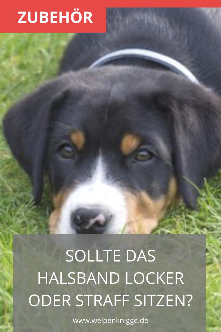 Yahoo Image Search Sennenhund Entlebucher Sennenhund Hunderassen