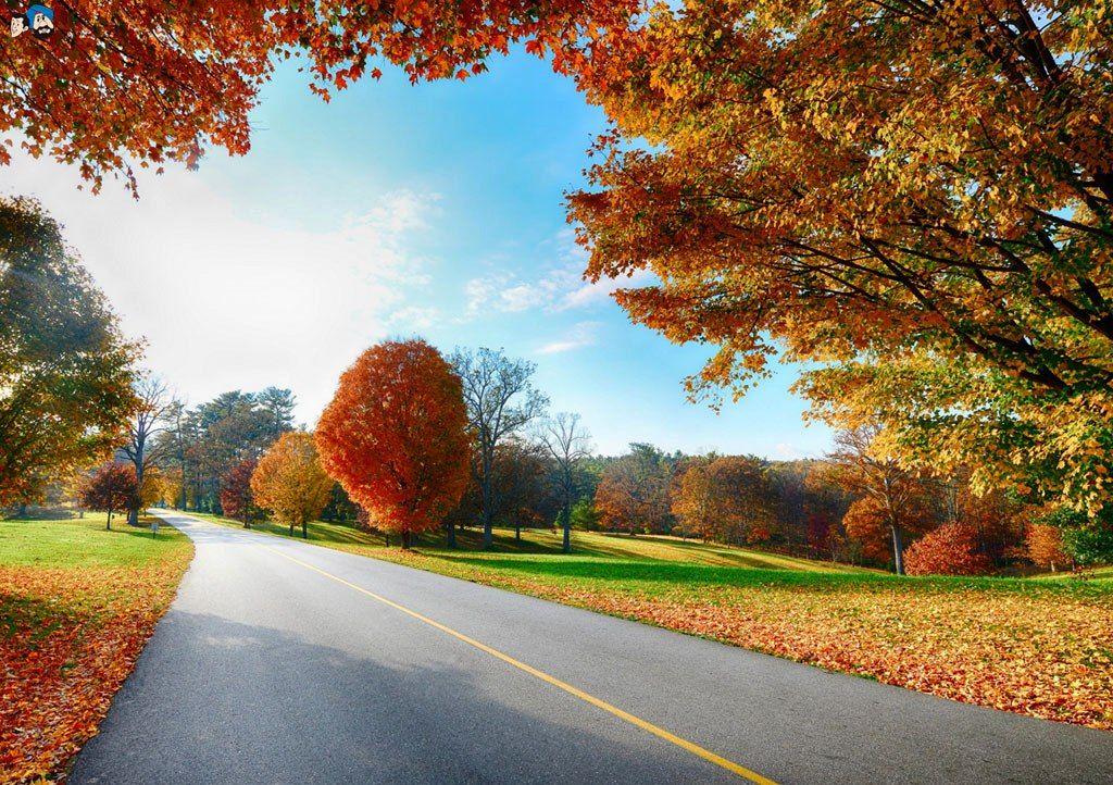 Pemandangan Jalan Musim Gugur   Wallpaper Jatuh, Pemandangan, Wallpaper Alam