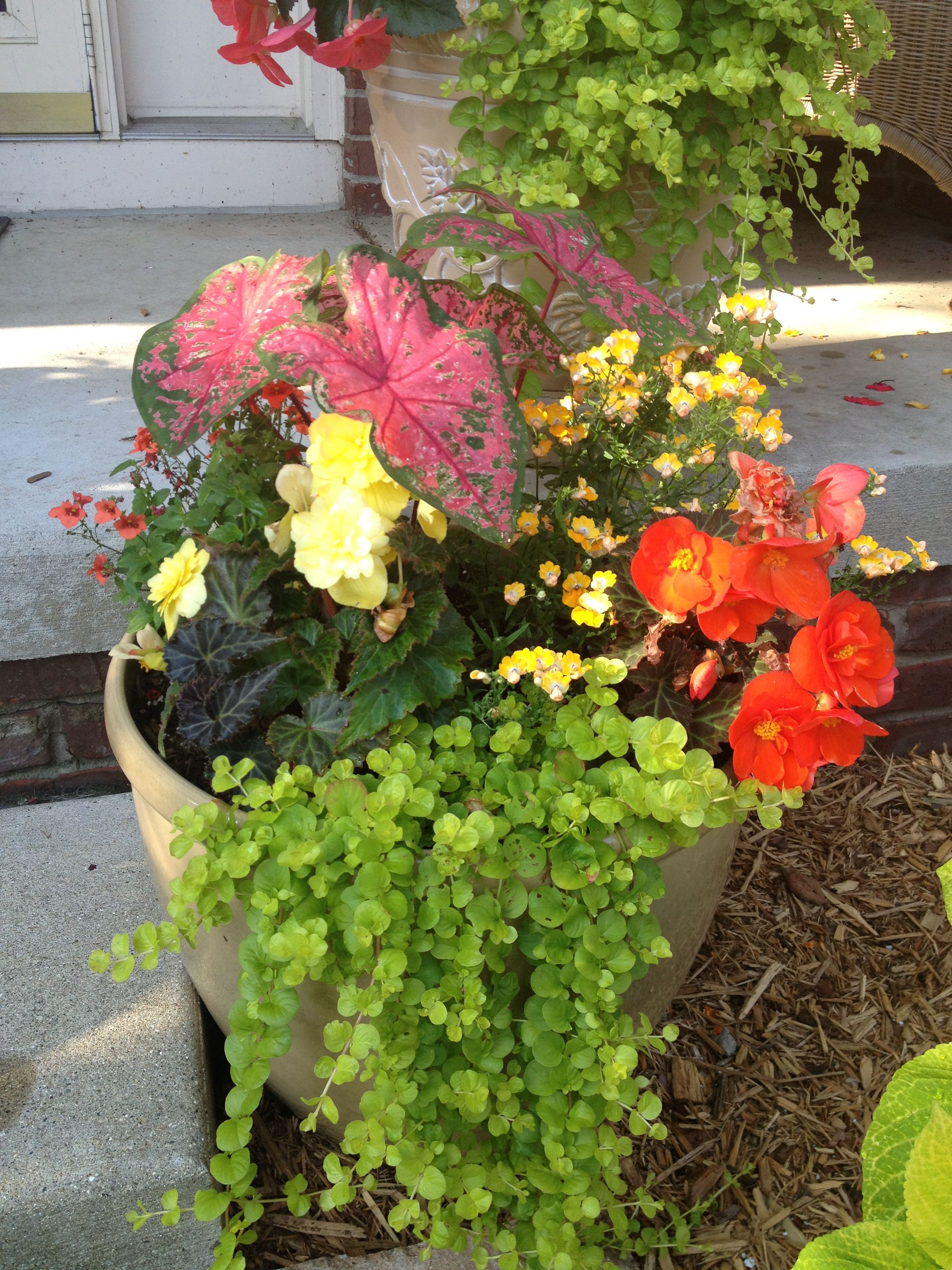 Shade loving flowers (our front porch)