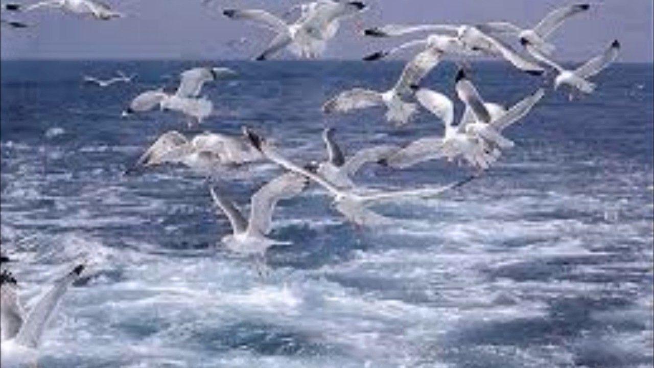 Il Gabbiano Immagini Uccelli Gabbiano